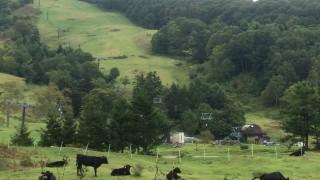 レースの雰囲気だけでなくコースもまったり雰囲気。牛君たちの横を走って行きます。